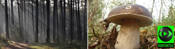 Tajemniczy las i jego owoce