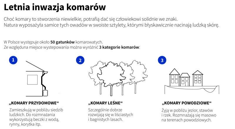 Rodzaje komarów w Polsce (Adam Ziemienowicz, Maria Samczuk/PAP)